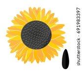 sunflower and sunflower seeds... | Shutterstock .eps vector #691983397