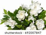 White Gardenia Blooming White...