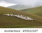 An Herd Of Sheep Pasturing On ...