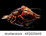 alive  animal  aquarium ...   Shutterstock . vector #692025643