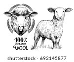 sketch of a lamb and sheep.... | Shutterstock .eps vector #692145877