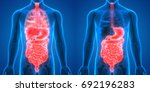 human body organs anatomy ... | Shutterstock . vector #692196283