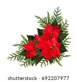 Christmas Red Poinsettia...