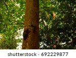 Marmot On The Tree   Ko Surin ...