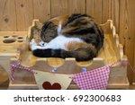 tabby cat sleep in wooden box... | Shutterstock . vector #692300683
