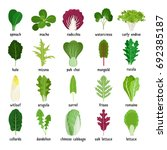 green salad leaves. vegetarian... | Shutterstock . vector #692385187