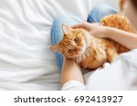 cute ginger cat lies on woman's ... | Shutterstock . vector #692413927