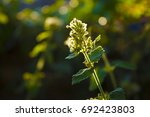 melissa in the garden with... | Shutterstock . vector #692423803