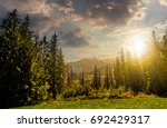 Spruce Forest On A Meadow In...