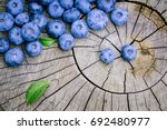 freshly picked blueberries on a ... | Shutterstock . vector #692480977