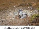 san cristobal island  galapagos ... | Shutterstock . vector #692489563
