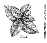 ink sketch of mint. isolated on ...   Shutterstock .eps vector #692549953