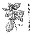 ink sketch of mint. isolated on ... | Shutterstock .eps vector #692549977