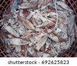 Small photo of Fresh neritic squid in basket at the seafood market