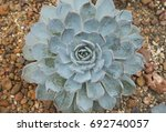 close up of cactus plant | Shutterstock . vector #692740057