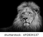 lion portrait in black white | Shutterstock . vector #692834137