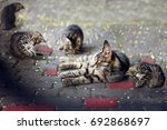 Cat Mother And Four Kittens On...