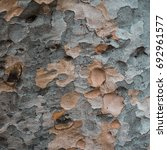 Small photo of Bark of Queensland Kauri Pine tree