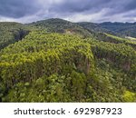 Drone Aerial View From Forest...
