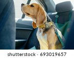 safety of dogs in the car  | Shutterstock . vector #693019657