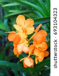 Small photo of Yellow vanda orchid