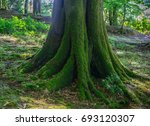 moss covered tree in the woods. | Shutterstock . vector #693120307
