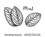 ink sketch of mint leaves.... | Shutterstock .eps vector #693276133