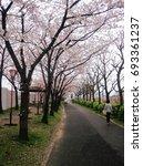 sakura flower in april  japan | Shutterstock . vector #693361237
