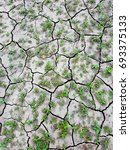 Small photo of cracked dried river silt germinating plants