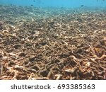 Small photo of Destroyed area due to fish bombing and trawlers within the coral reef area in, Malaysia