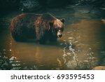 brown bear in stream. | Shutterstock . vector #693595453