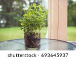 Mint In A Glass Vase Placed On...