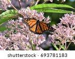 a beautiful orange and black... | Shutterstock . vector #693781183