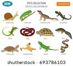 pet reptiles and amphibians... | Shutterstock .eps vector #693786103