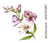 composition with alstroemeria.... | Shutterstock . vector #693793387