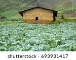 farmhouse and vegetable fields. ... | Shutterstock . vector #693931417
