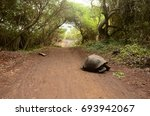 A Giant Tortoise On A Dirt Roa...
