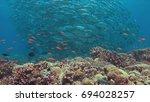 school of big eye trevallies on ... | Shutterstock . vector #694028257