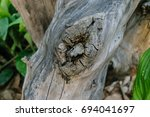 bark of old wooden background