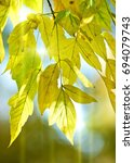 autumn leaves  photographed on... | Shutterstock . vector #694079743