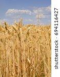 Sunlit Field Of Ripe Wheat...