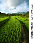 Small photo of Rice terrace/Rice field