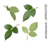 set of rose leaves. full depth... | Shutterstock . vector #694414753