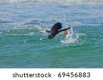 penguin jumps out of the water... | Shutterstock . vector #69456883