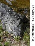 Small photo of American Crocodile (Crocodylus acutus), Florida, USA, North America