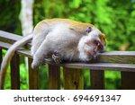 monkey in ubud monkey forest ... | Shutterstock . vector #694691347