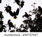 Small photo of hispaniolan amazon / parrot (amazona ventralis) flying against the light
