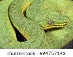 green tree boa  corallus caninus   Shutterstock . vector #694757143