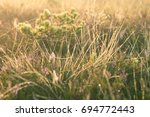 a field of beautiful green... | Shutterstock . vector #694772443