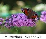 butterfly on a buddleja  ... | Shutterstock . vector #694777873